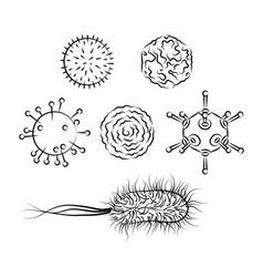 Influenza viruses and e coli bacteria vector