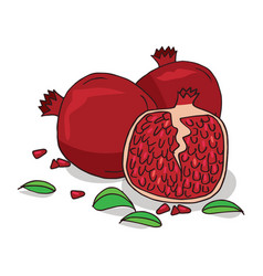 isolate ripe pomegranate fruit vector image