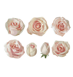 Set watercolor tea roses isolated on white vector