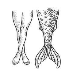 woman legs and mermaid tail sketch vector image
