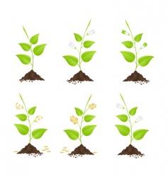 money trees vector image vector image