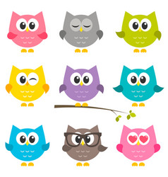 set of funny owls isolated on white vector image