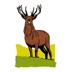 hand drawn deer with wildlife text isolated on a vector image