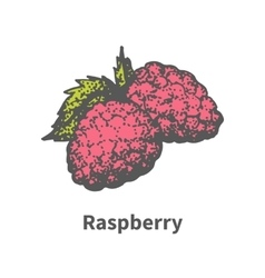 Hand-drawn ripe juicy red raspberry vector