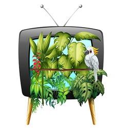 Macaw bird in jungle vector