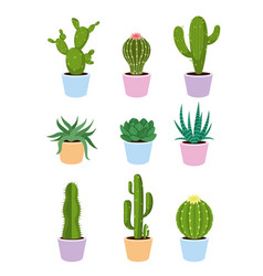 set of succulents and cactus vector image