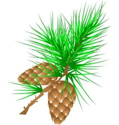 fir cones vector image