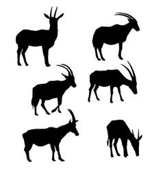 set of antelopes vector image