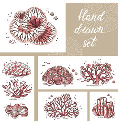 beautiful coral card for print art shop circle vector image