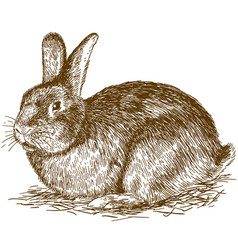 Engraving of bunny vector