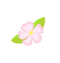 Summer flower frangipani or hibiscus hawaii vector