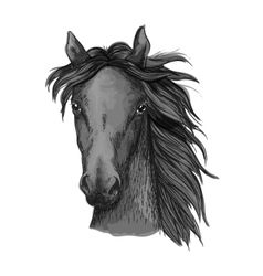 Black arabian horse head sketch vector