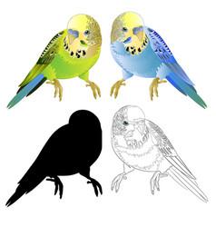 Green and blue parakeets budgerigar home pet vector