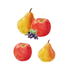 watercolor fruit composition vector image