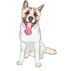 Dog American Akita breed laughs vector
