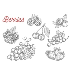 Summer fruit and berry sketch for food design vector
