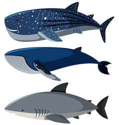 three different types of sharks vector image