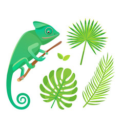 flora and fauna chameleon and fern leaf vector image
