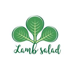 Salad plant corn salad vector