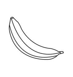 Banana fruit sweet vitamins food line vector