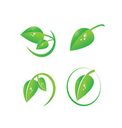 green leaf with dew drops organic symbol set vector image