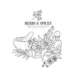 Herbs And Spices Hand Drawn Realistic Sketch vector
