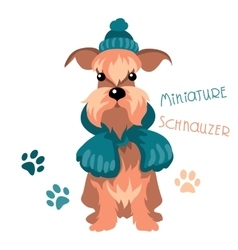 Miniature Schnauzer dog in winter hat and scarf vector image