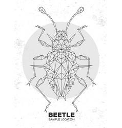 abstract polygonal triangle endomychidae beetle vector image