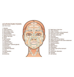 Acupuncture points on face young woman face vector