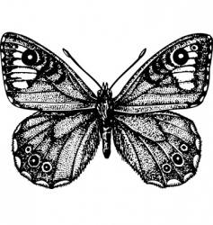 Butterfly astride vector