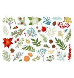 Christmas plant and floral set include vector