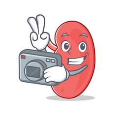 Photographer kidney mascot cartoon style vector