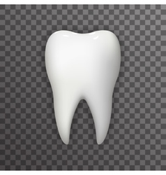 Realistic 3d Tooth Poster Transperent Stomatology vector image vector image