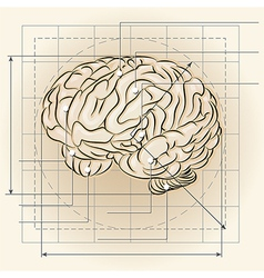 Brain map vector image