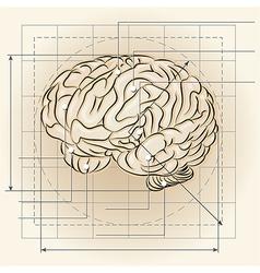 Brain map vector