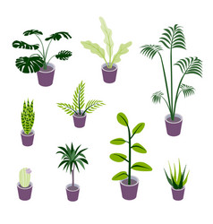 Isometric potted plants for indoor design vector