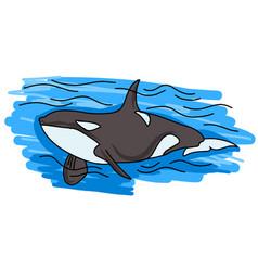 orca killer whale logo vector image