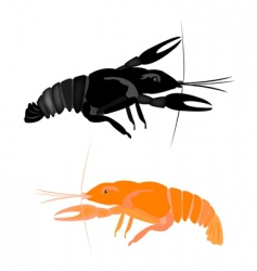 River cancer vector