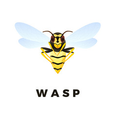Wasp cartoon isolated on white background vector