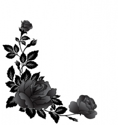 corner rose design vector image