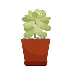 Cactus in brown flower pot vector