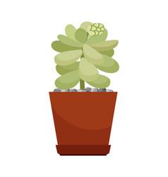 cactus in brown flower pot vector image