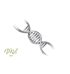 Dna concept hand drawn isolated vector