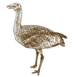 Engraving of great bustard otis tarda vector