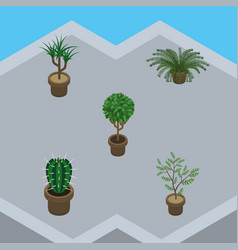 Isometric plant set of tree fern plant and other vector