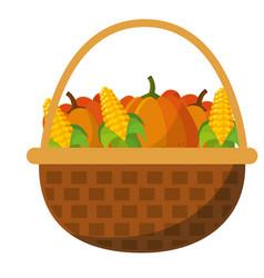 pumpkins and corns design vector image vector image
