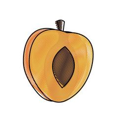 Draw slice apricot fruit harvest diet vector
