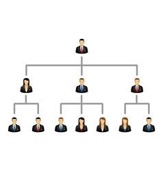 Business hierarchy structure vector