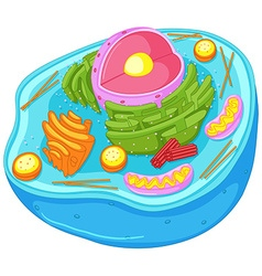 Close up diagram of animal cell vector