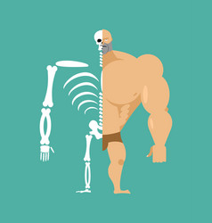 Human structure half body and skeleton anatomic vector